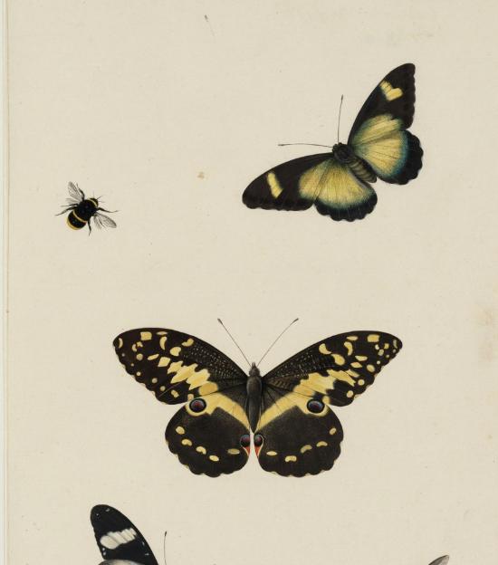 Expositie: een ode aan de Nederlandse vlinder